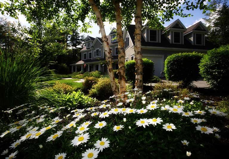 landscape-design-front-yard
